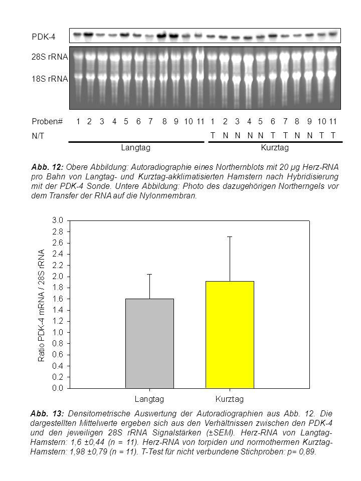 Abb. 13: Densitometrische Auswertung der Autoradiographien aus Abb.