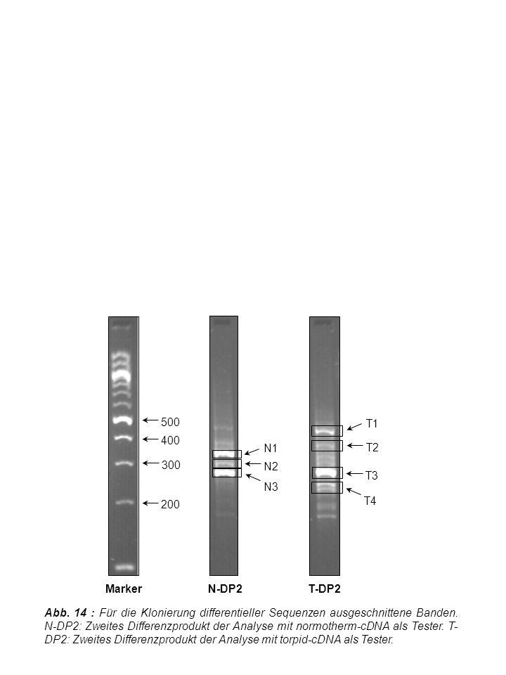 Abb. 14 : Für die Klonierung differentieller Sequenzen ausgeschnittene Banden.