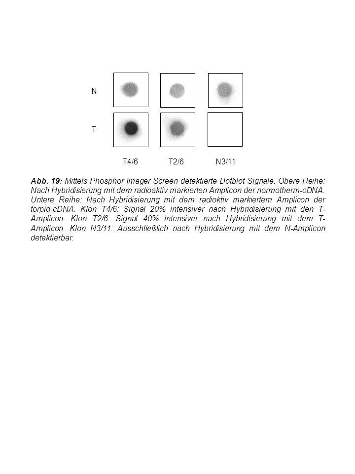 N T T4/6T2/6N3/11 Abb. 19: Mittels Phosphor Imager Screen detektierte Dotblot-Signale.
