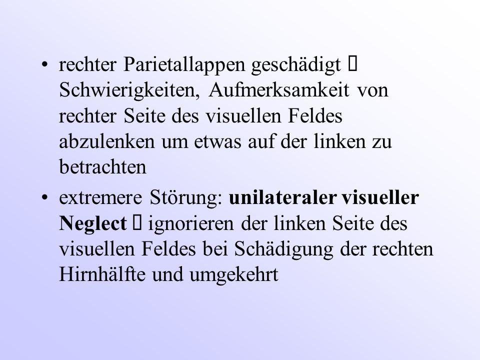 rechter Parietallappen geschädigt  Schwierigkeiten, Aufmerksamkeit von rechter Seite des visuellen Feldes abzulenken um etwas auf der linken zu betra