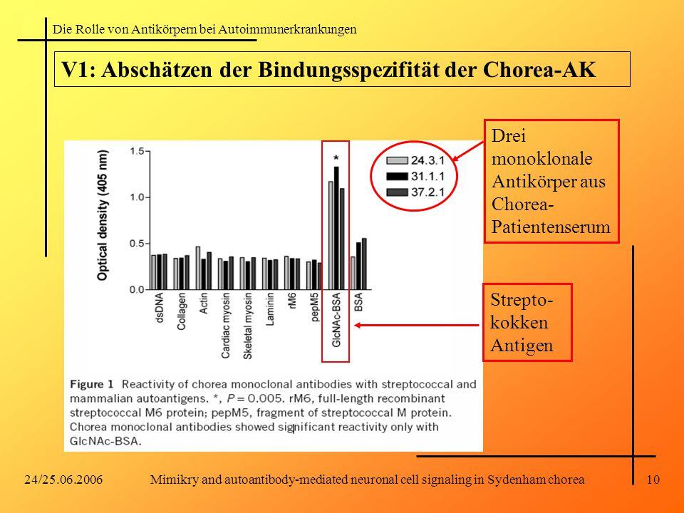 Die Rolle von Antikörpern bei Autoimmunerkrankungen 24/25.06.2006Mimikry and autoantibody-mediated neuronal cell signaling in Sydenham chorea10 V1: Abschätzen der Bindungsspezifität der Chorea-AK Drei monoklonale Antikörper aus Chorea- Patientenserum Strepto- kokken Antigen