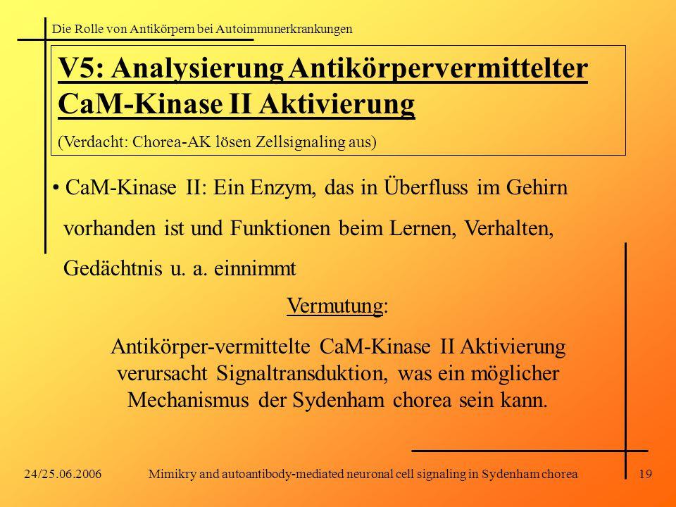 Die Rolle von Antikörpern bei Autoimmunerkrankungen 24/25.06.2006Mimikry and autoantibody-mediated neuronal cell signaling in Sydenham chorea19 V5: Analysierung Antikörpervermittelter CaM-Kinase II Aktivierung (Verdacht: Chorea-AK lösen Zellsignaling aus) CaM-Kinase II: Ein Enzym, das in Überfluss im Gehirn vorhanden ist und Funktionen beim Lernen, Verhalten, Gedächtnis u.