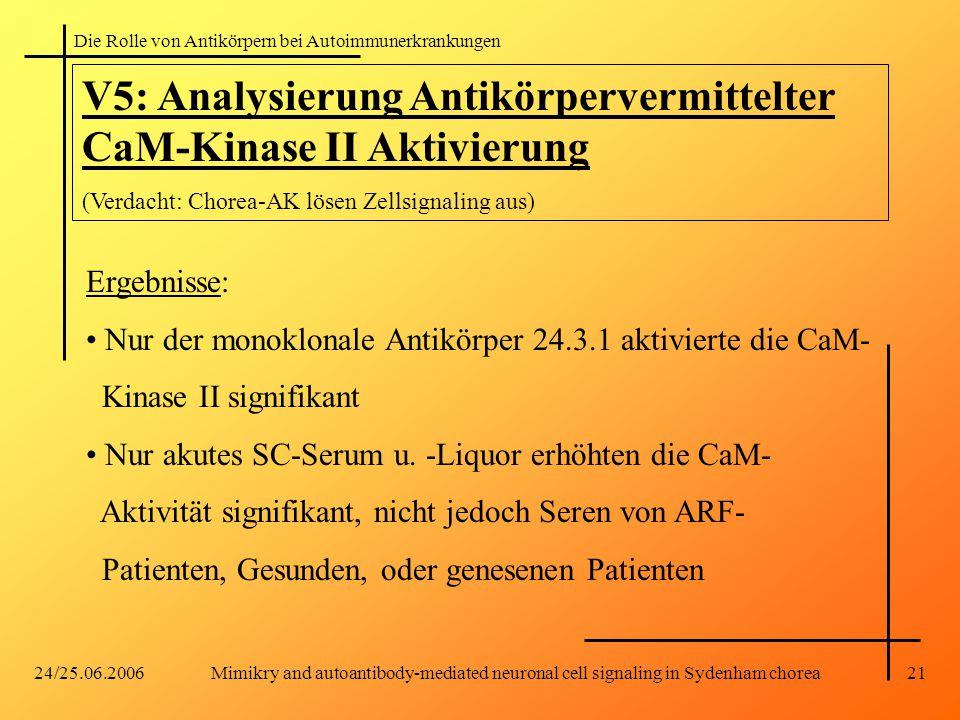 Die Rolle von Antikörpern bei Autoimmunerkrankungen 24/25.06.2006Mimikry and autoantibody-mediated neuronal cell signaling in Sydenham chorea21 V5: Analysierung Antikörpervermittelter CaM-Kinase II Aktivierung (Verdacht: Chorea-AK lösen Zellsignaling aus) Ergebnisse: Nur der monoklonale Antikörper 24.3.1 aktivierte die CaM- Kinase II signifikant Nur akutes SC-Serum u.