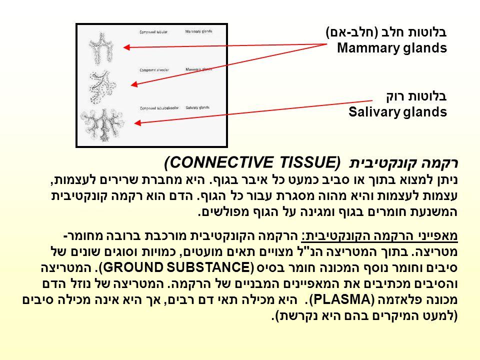 בלוטות חלב (חלב-אם) Mammary glands בלוטות רוק Salivary glands רקמה קונקטיבית (CONNECTIVE TISSUE) ניתן למצוא בתוך או סביב כמעט כל איבר בגוף. היא מחברת
