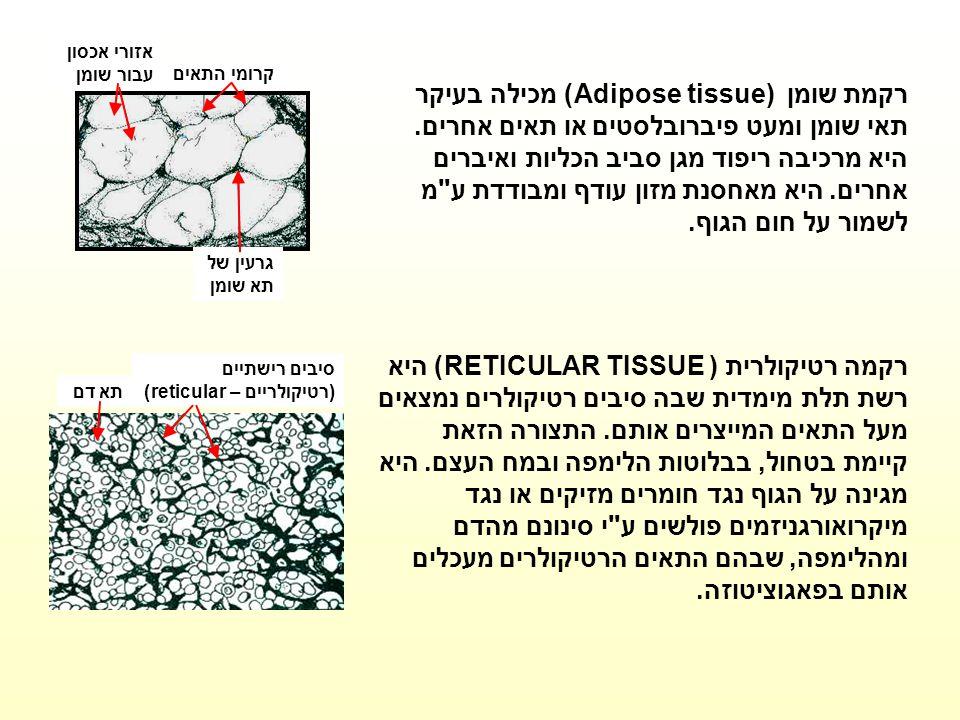 קרומי התאים אזורי אכסון עבור שומן גרעין של תא שומן רקמת שומן Adipose tissue) ) מכילה בעיקר תאי שומן ומעט פיברובלסטים או תאים אחרים. היא מרכיבה ריפוד מ