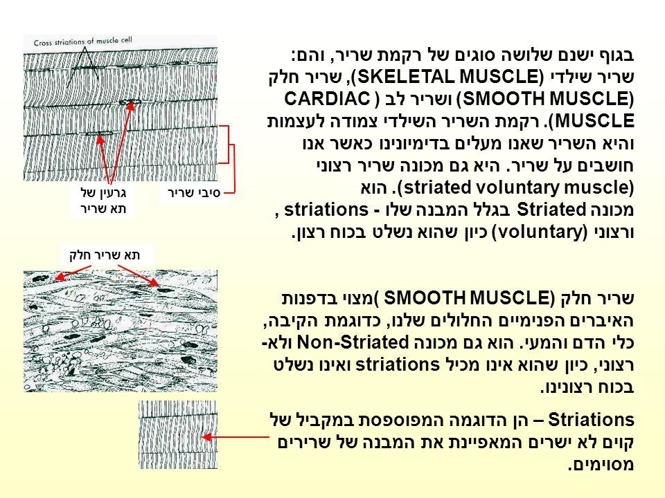 גרעין של תא שריר סיבי שריר בגוף ישנם שלושה סוגים של רקמת שריר, והם: שריר שילדי (SKELETAL MUSCLE), שריר חלק (SMOOTH MUSCLE) ושריר לב (CARDIAC MUSCLE).