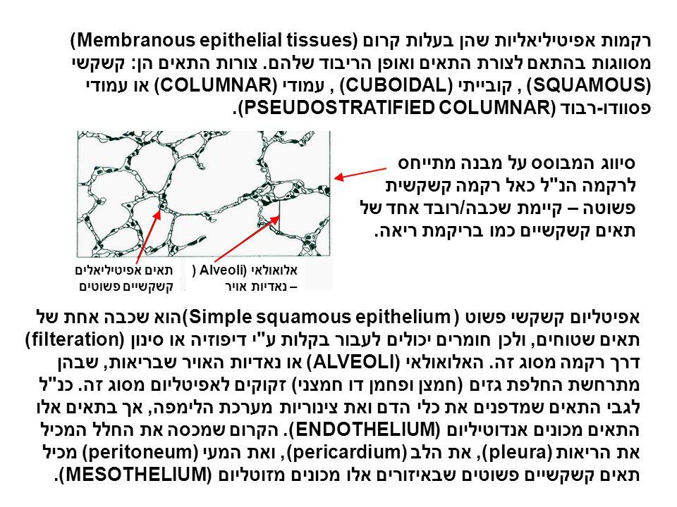 רקמות אפיטיליאליות שהן בעלות קרום (Membranous epithelial tissues) מסווגות בהתאם לצורת התאים ואופן הריבוד שלהם. צורות התאים הן: קשקשי (SQUAMOUS), קוביי