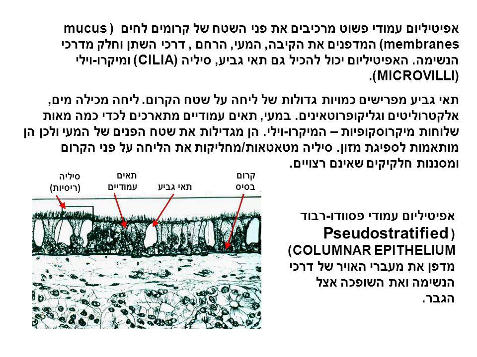 תא סחוס בתוך לאקונהסיבי קולגן מטריצה סחוס-סיבי סחוס-סיבי (FIBROCARTILAGE) הוא הסחוס החזק ביותר.