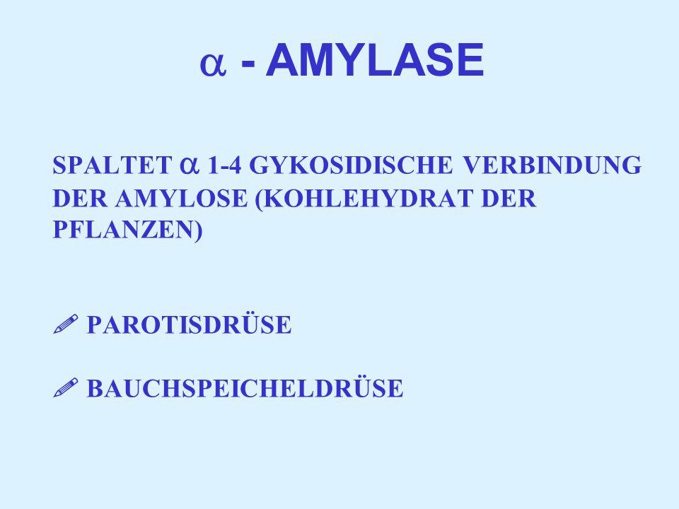 SPALTET  1-4 GYKOSIDISCHE VERBINDUNG DER AMYLOSE (KOHLEHYDRAT DER PFLANZEN)  PAROTISDRÜSE  BAUCHSPEICHELDRÜSE  - AMYLASE