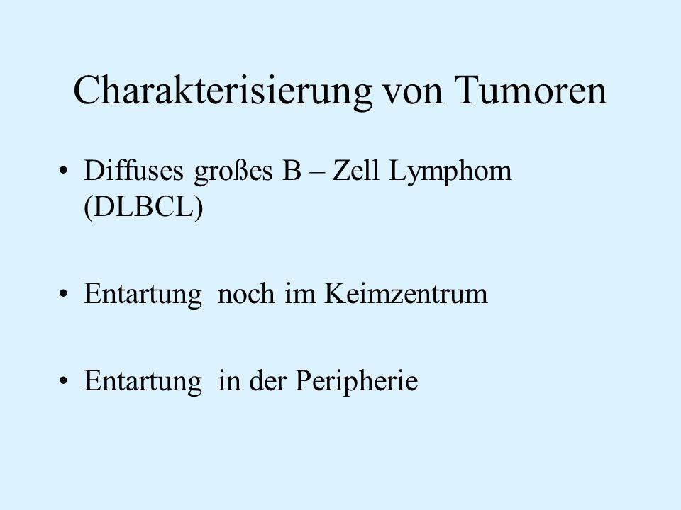 Charakterisierung von Tumoren Diffuses großes B – Zell Lymphom (DLBCL) Entartung noch im Keimzentrum Entartung in der Peripherie