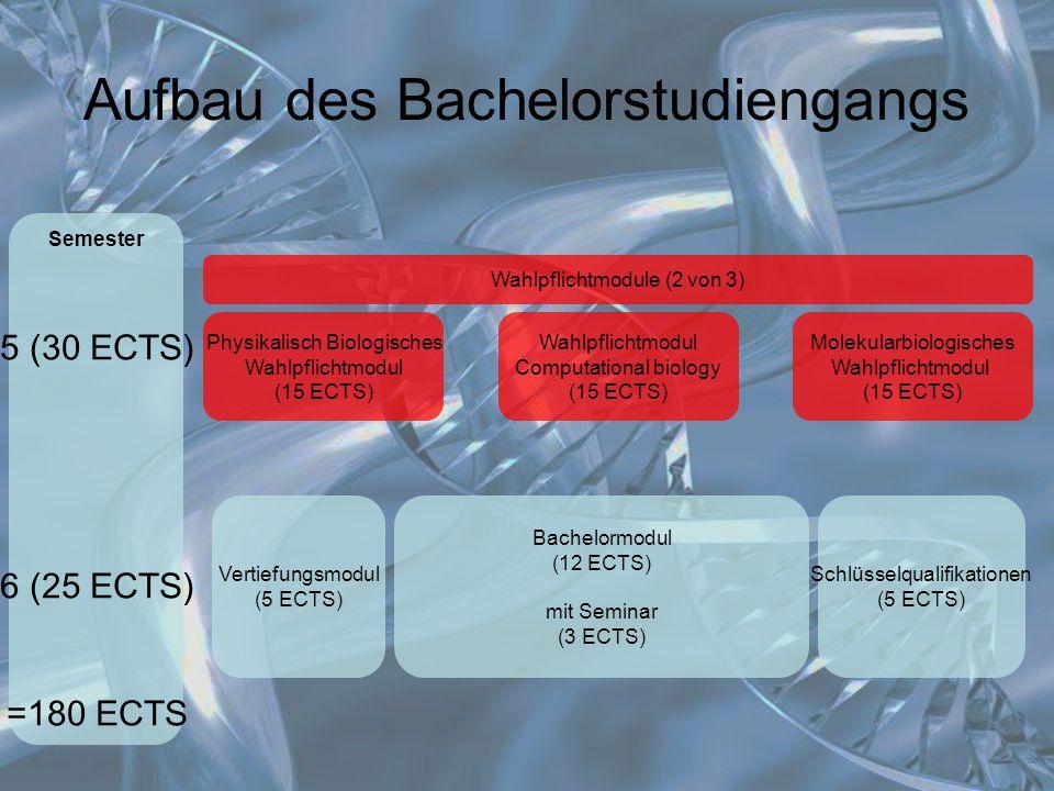 Aufbau des Bachelorstudiengangs Wahlpflichtmodule (2 von 3) Semester 5 (30 ECTS) 6 (25 ECTS) =180 ECTS Physikalisch Biologisches Wahlpflichtmodul (15