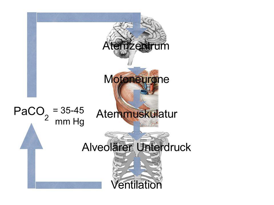 Atemmuskulatur Motoneurone Ventilation Alveolärer Unterdruck Atemzentrum = 35-45 mm Hg PaCO 2
