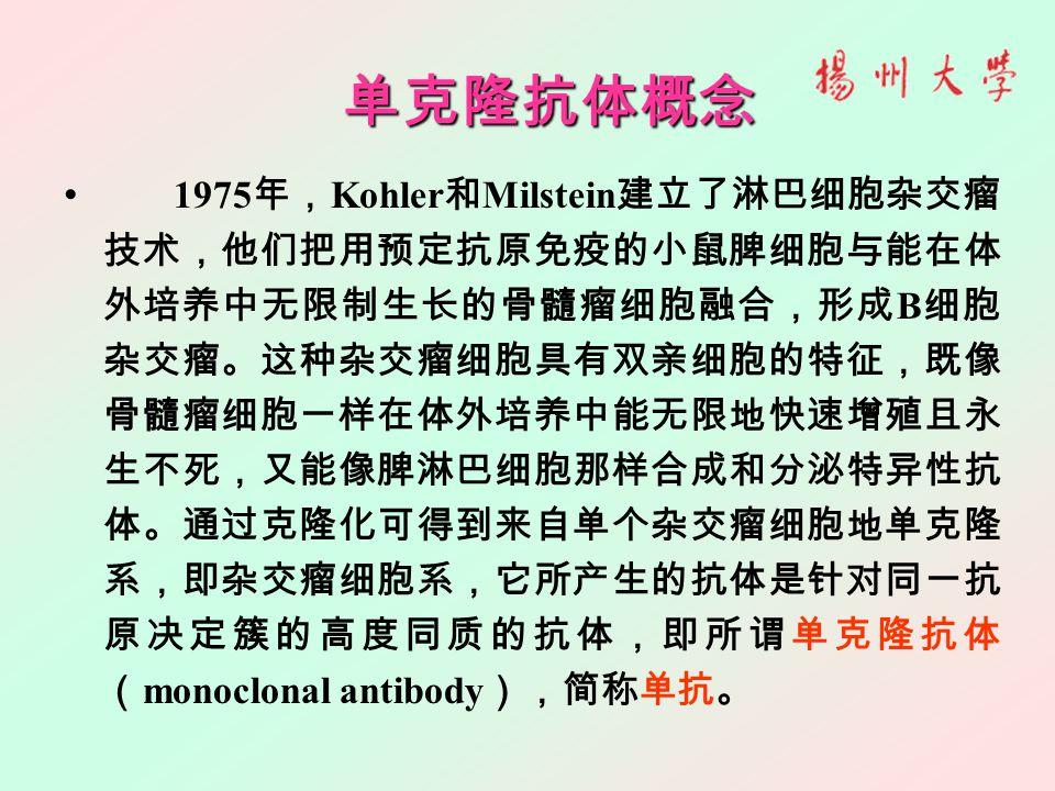 单克隆抗体概念 1975 年, Kohler 和 Milstein 建立了淋巴细胞杂交瘤 技术,他们把用预定抗原免疫的小鼠脾细胞与能在体 外培养中无限制生长的骨髓瘤细胞融合,形成 B 细胞 杂交瘤。这种杂交瘤细胞具有双亲细胞的特征,既像 骨髓瘤细胞一样在体外培养中能无限地快速增殖且永 生不死,又能像脾淋巴细胞那样合成和分泌特异性抗 体。通过克隆化可得到来自单个杂交瘤细胞地单克隆 系,即杂交瘤细胞系,它所产生的抗体是针对同一抗 原决定簇的高度同质的抗体,即所谓单克隆抗体 ( monoclonal antibody ),简称单抗。