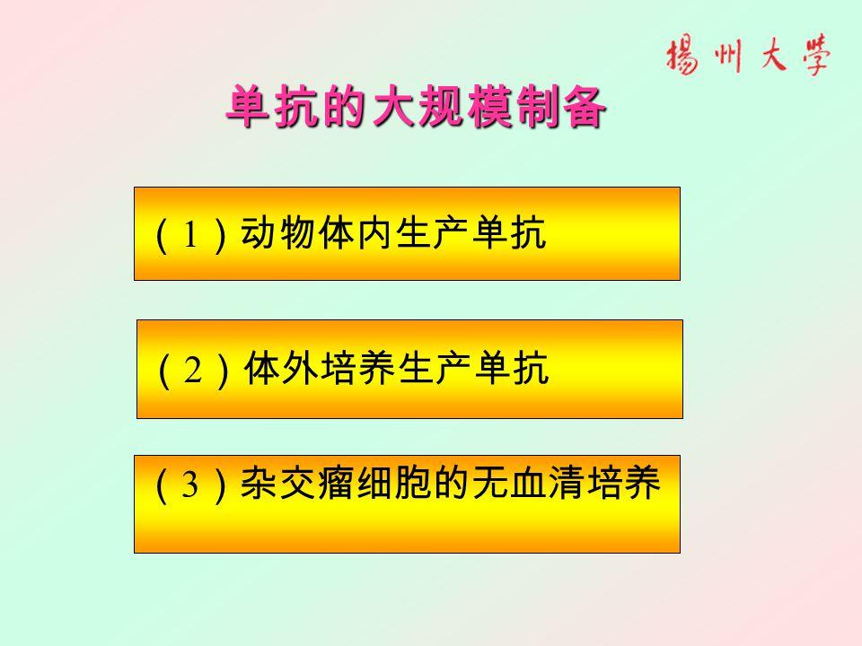 单抗的大规模制备 ( 1 )动物体内生产单抗 ( 3 )杂交瘤细胞的无血清培养 ( 2 )体外培养生产单抗