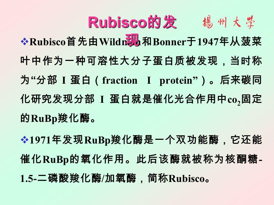 " Rubisco 首先由 Wildman 和 Bonner 于 1947 年从菠菜 叶中作为一种可溶性大分子蛋白质被发现,当时称 为 "" 分部 I 蛋白( fraction I protein"" )。后来碳同 化研究发现分部 I 蛋白就是催化光合作用中 co 2 固定 的 RuBp 羧化酶。 "