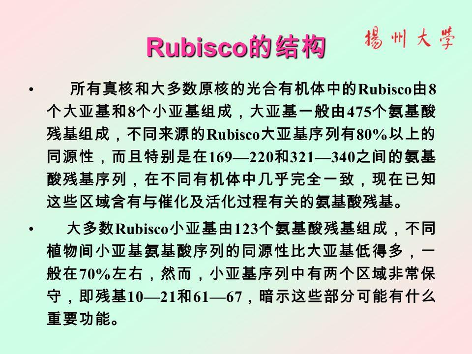 Rubisco 的结构 所有真核和大多数原核的光合有机体中的 Rubisco 由 8 个大亚基和 8 个小亚基组成,大亚基一般由 475 个氨基酸 残基组成,不同来源的 Rubisco 大亚基序列有 80% 以上的 同源性,而且特别是在 169—220 和 321—340 之间的氨基 酸残基序列,在