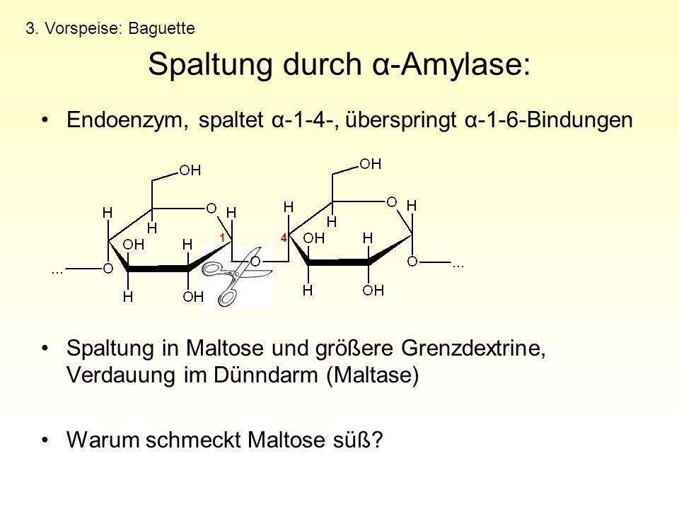 Endoenzym, spaltet α-1-4-, überspringt α-1-6-Bindungen Spaltung in Maltose und größere Grenzdextrine, Verdauung im Dünndarm (Maltase) Warum schmeckt M