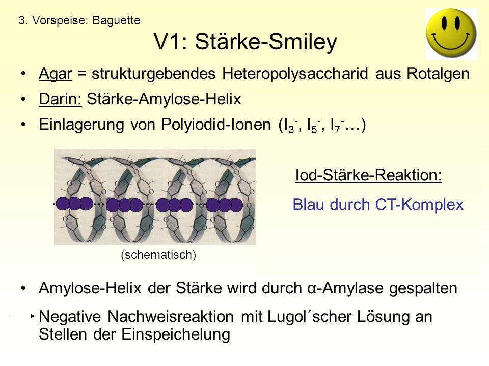 V1: Stärke-Smiley Agar = strukturgebendes Heteropolysaccharid aus Rotalgen Darin: Stärke-Amylose-Helix Einlagerung von Polyiodid-Ionen (I 3 -, I 5 -,