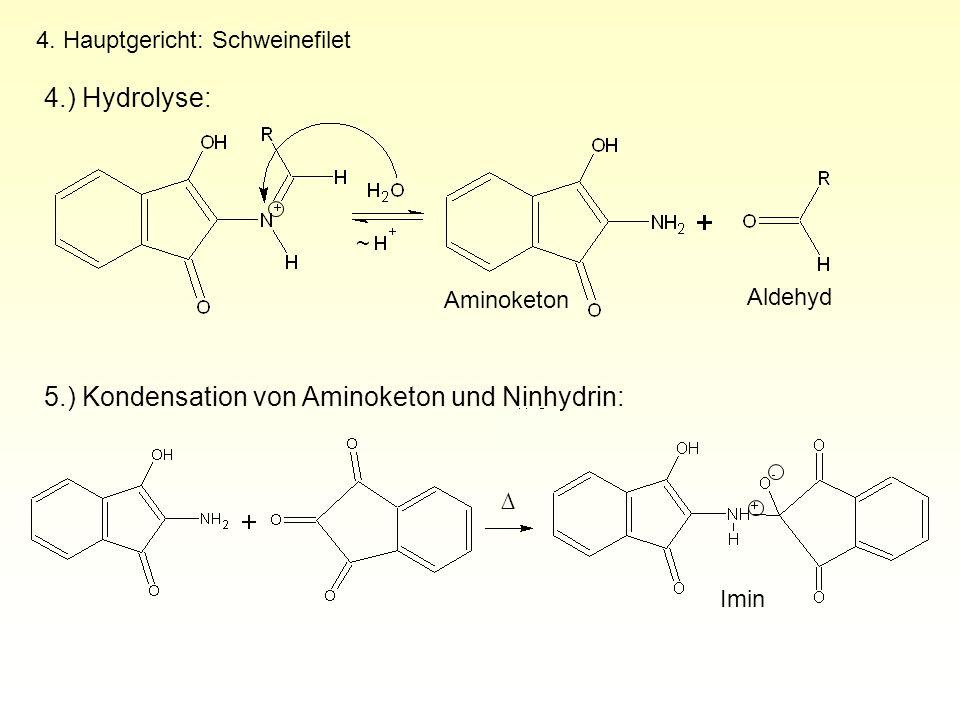 4. Hauptgericht: Schweinefilet 4.) Hydrolyse: Aminoketon Aldehyd 5.) Kondensation von Aminoketon und Ninhydrin: ∆ Imin ~