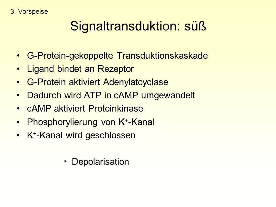 Signaltransduktion: süß G-Protein-gekoppelte Transduktionskaskade Ligand bindet an Rezeptor G-Protein aktiviert Adenylatcyclase Dadurch wird ATP in cA
