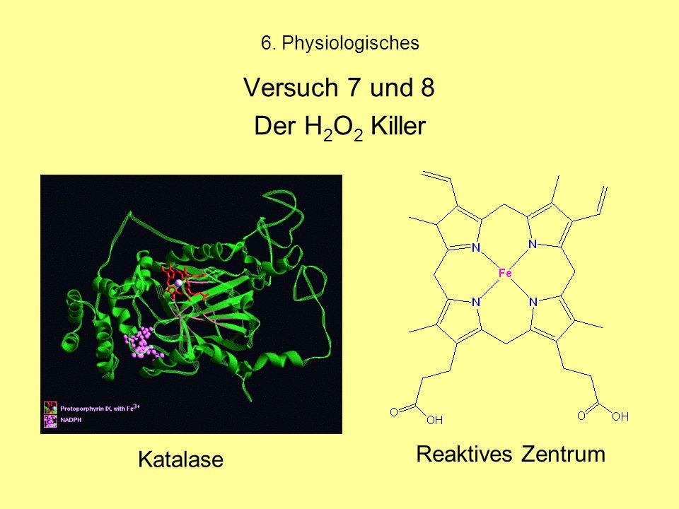 6. Physiologisches Versuch 7 und 8 Der H 2 O 2 Killer Katalase Reaktives Zentrum