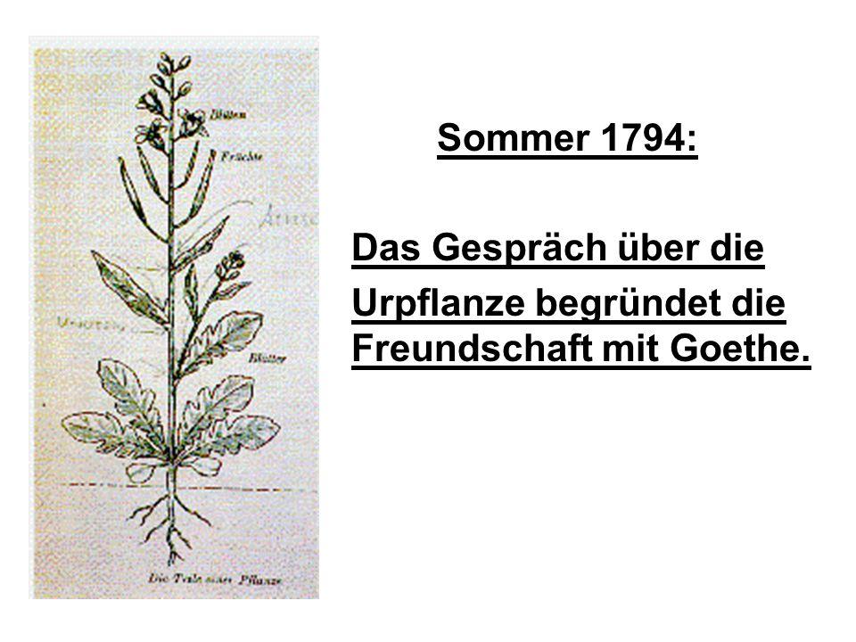 Sommer 1794: Das Gespräch über die Urpflanze begründet die Freundschaft mit Goethe.