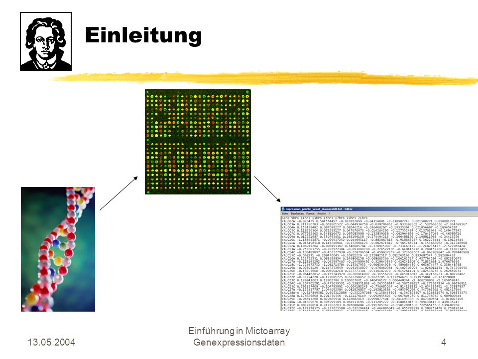 13.05.2004 Einführung in Mictoarray Genexpressionsdaten5 Einleitung
