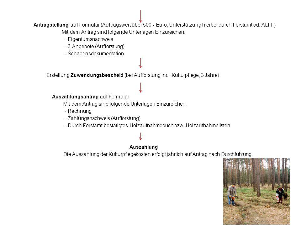 Antragstellung auf Formular (Auftragswert über 500,- Euro, Unterstützung hierbei durch Forstamt od.