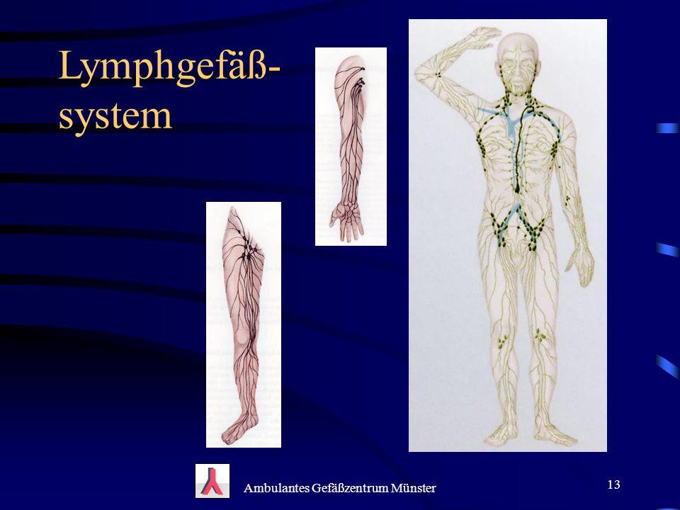 Lymphgefäß- system Ambulantes Gefäßzentrum Münster 13