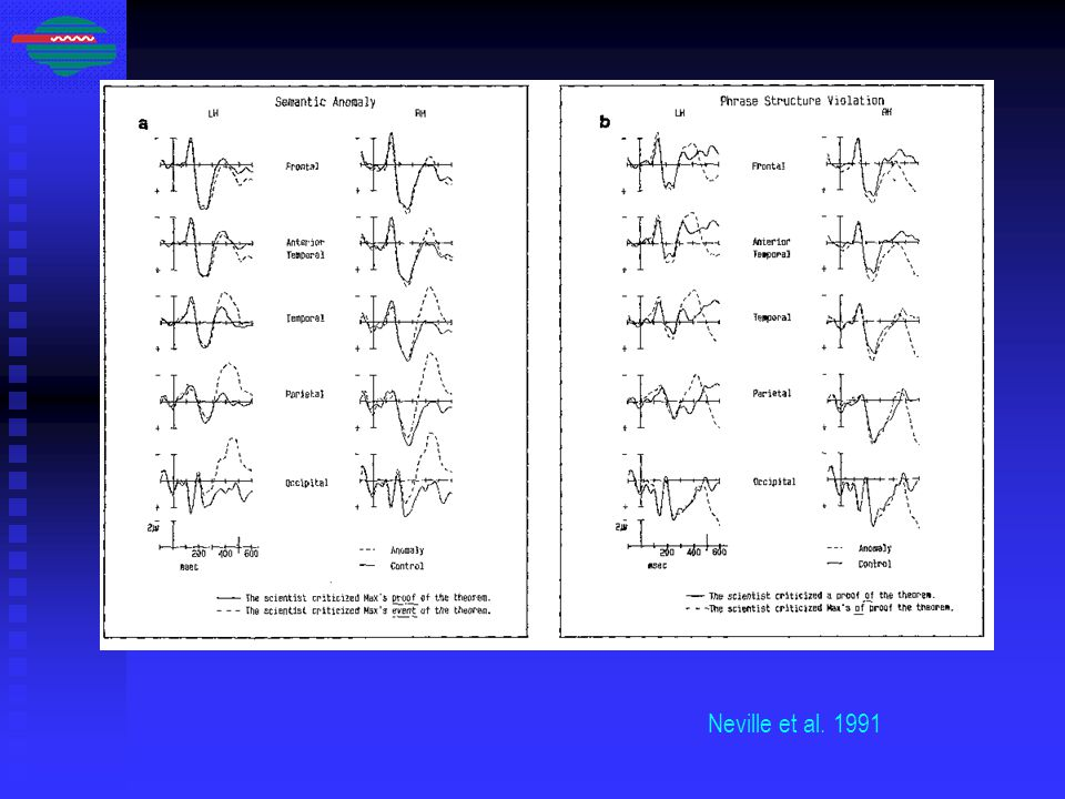 Neville et al. 1991