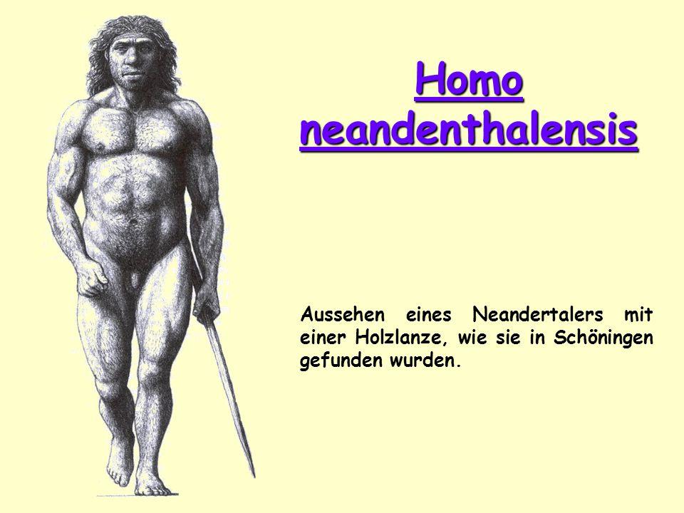 Homo neandenthalensis Aussehen eines Neandertalers mit einer Holzlanze, wie sie in Schöningen gefunden wurden.