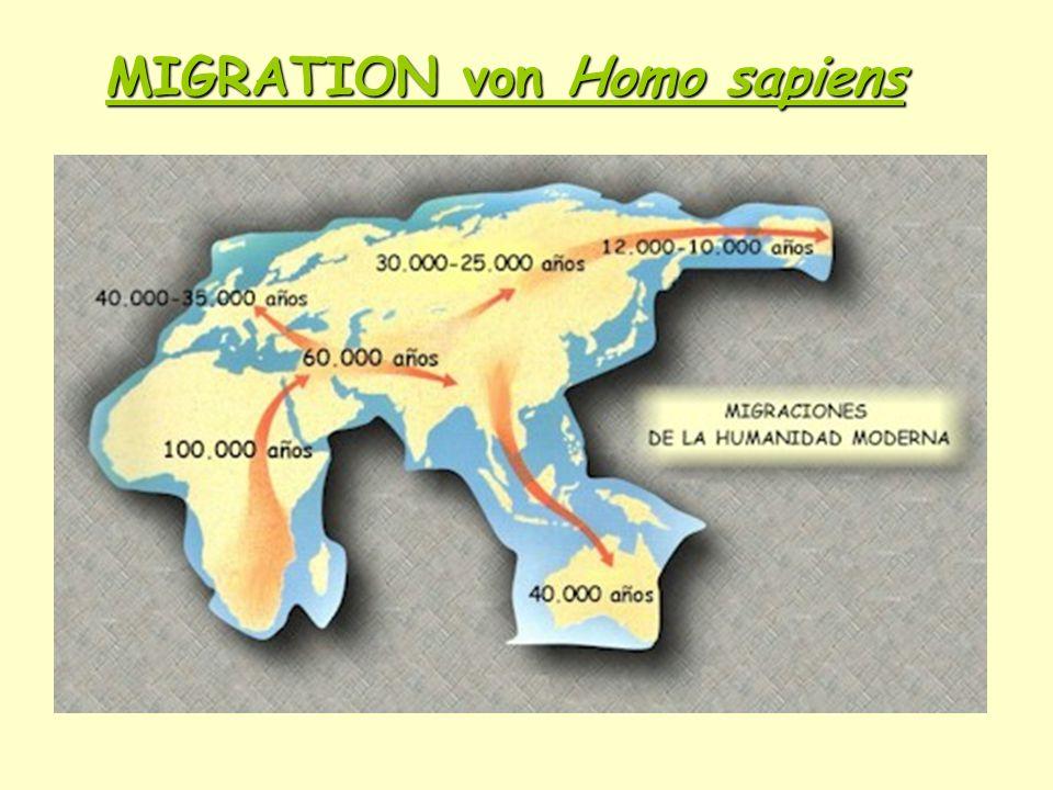 MIGRATION von Homo sapiens