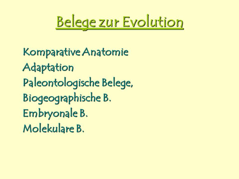 Belege zur Evolution Komparative Anatomie Adaptation Paleontologische Belege, Biogeographische B. Embryonale B. Molekulare B.
