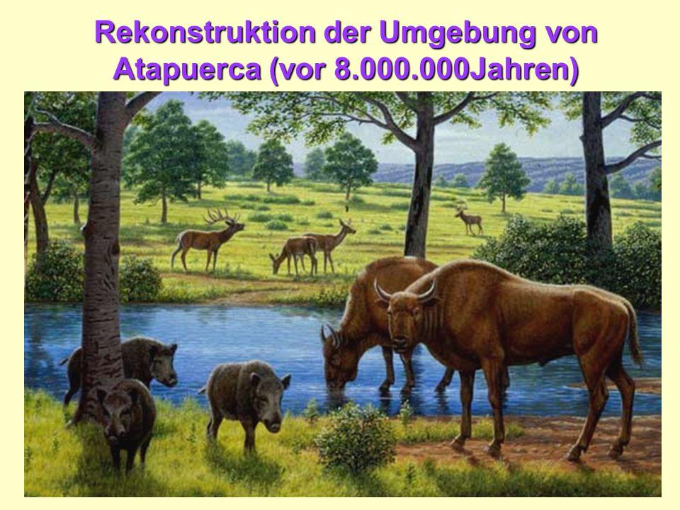Rekonstruktion der Umgebung von Atapuerca (vor 8.000.000Jahren)
