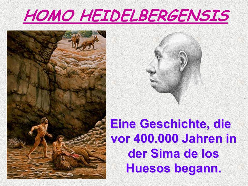 Eine Geschichte, die vor 400.000 Jahren in der Sima de los Huesos begann. Eine Geschichte, die vor 400.000 Jahren in der Sima de los Huesos begann. HO