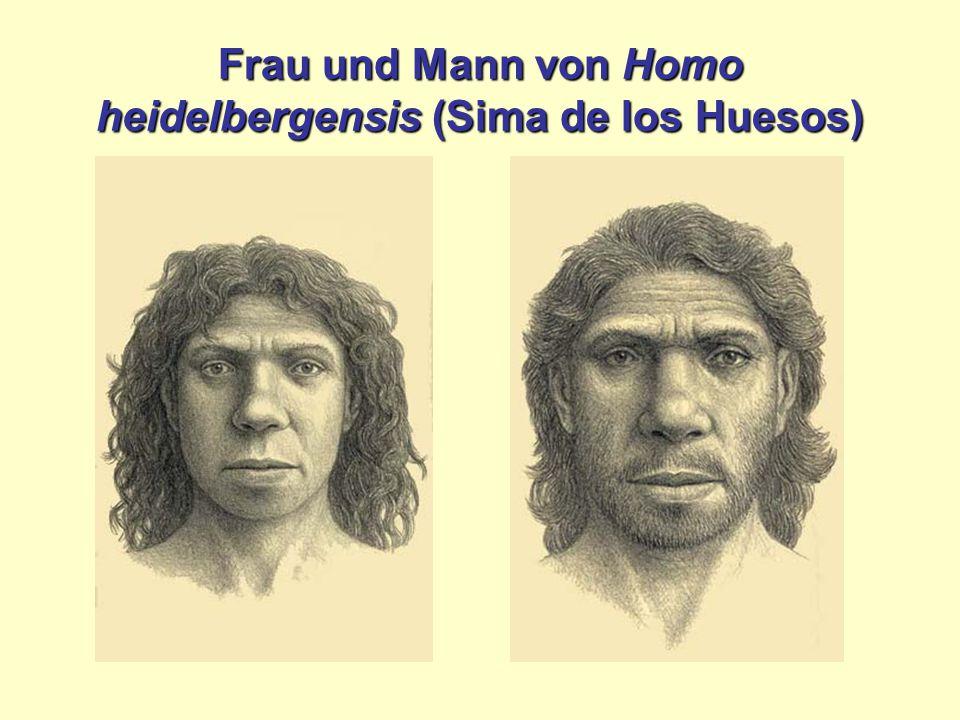 Frau und Mann von Homo heidelbergensis (Sima de los Huesos)