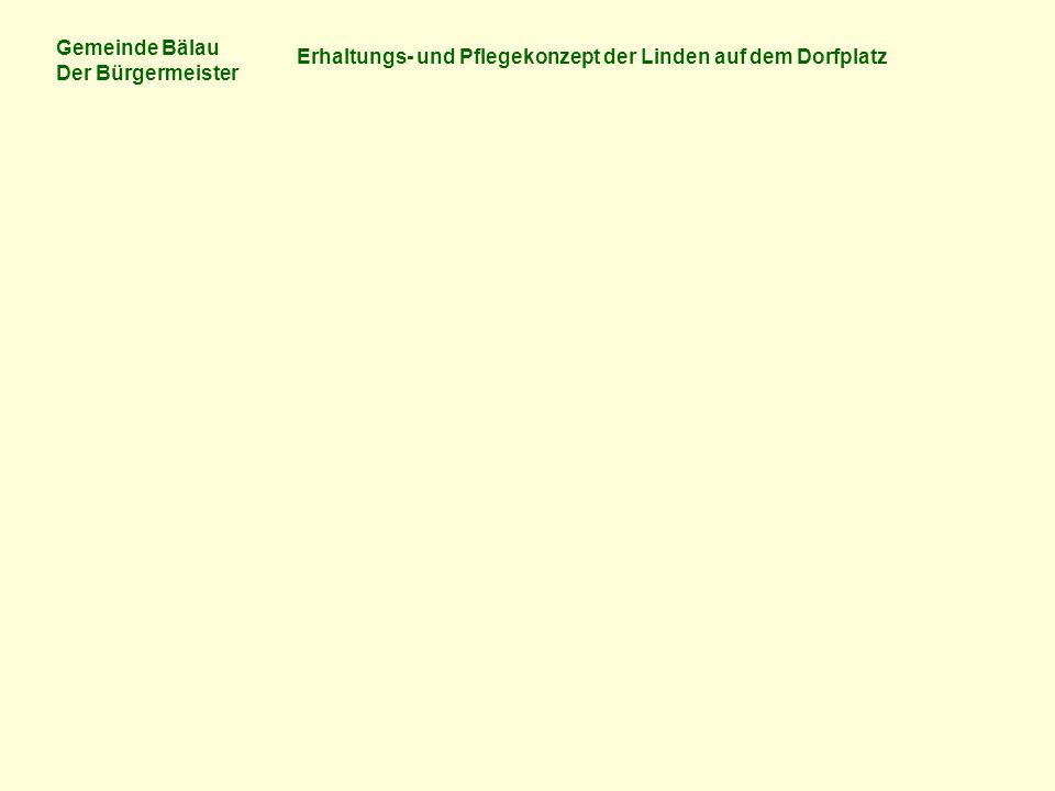 Gemeinde Bälau Der Bürgermeister Erhaltungs- und Pflegekonzept der Linden auf dem Dorfplatz Foto: Thomas Koppermann