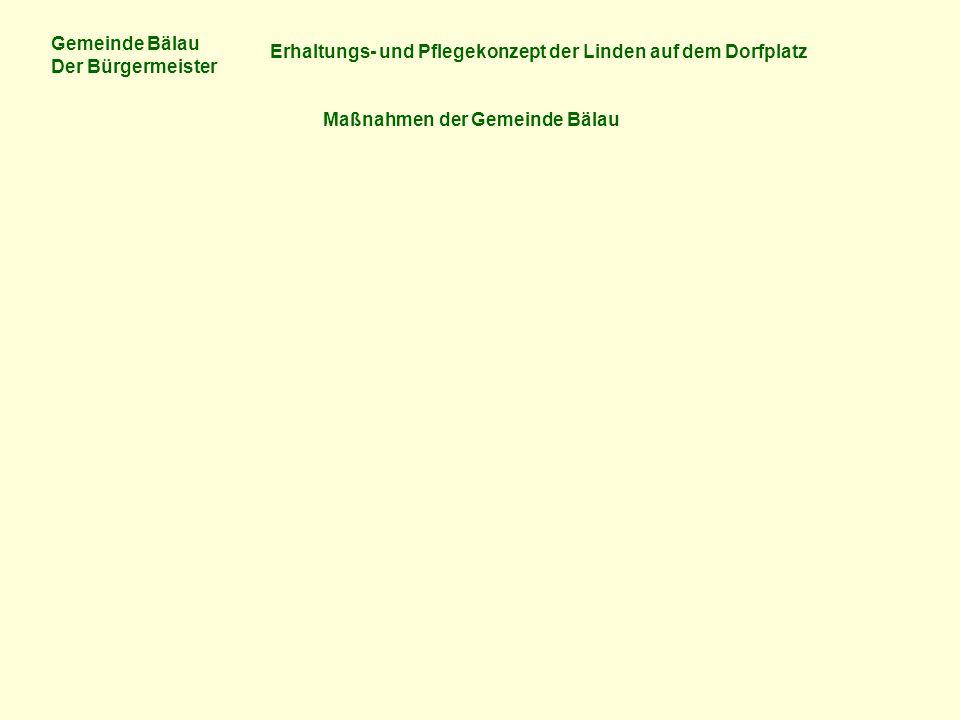 Gemeinde Bälau Der Bürgermeister Erhaltungs- und Pflegekonzept der Linden auf dem Dorfplatz Maßnahmen der Gemeinde Bälau