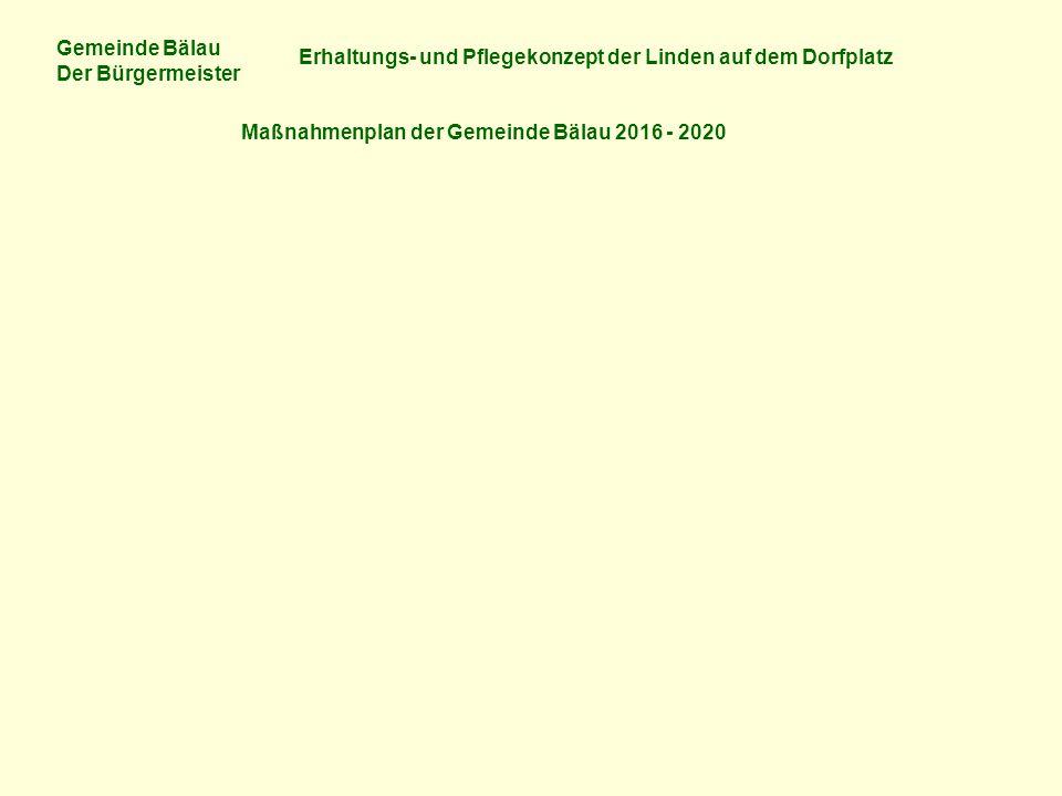Gemeinde Bälau Der Bürgermeister Erhaltungs- und Pflegekonzept der Linden auf dem Dorfplatz Maßnahmenplan der Gemeinde Bälau 2016 - 2020
