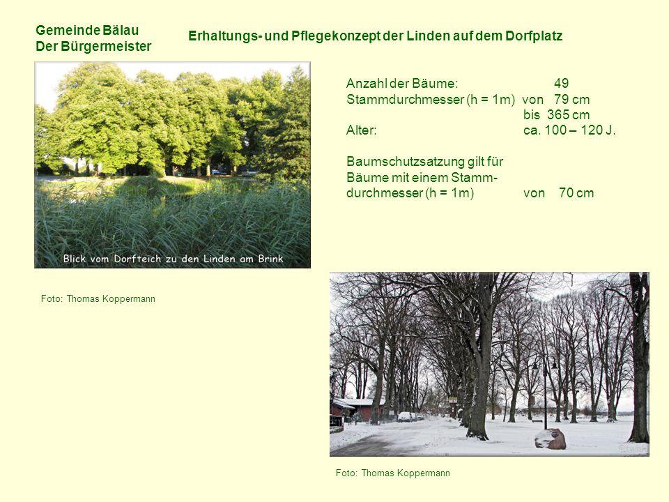 Gemeinde Bälau Der Bürgermeister Erhaltungs- und Pflegekonzept der Linden auf dem Dorfplatz Anzahl der Bäume: 49 Stammdurchmesser (h = 1m) von 79 cm bis 365 cm Alter: ca.