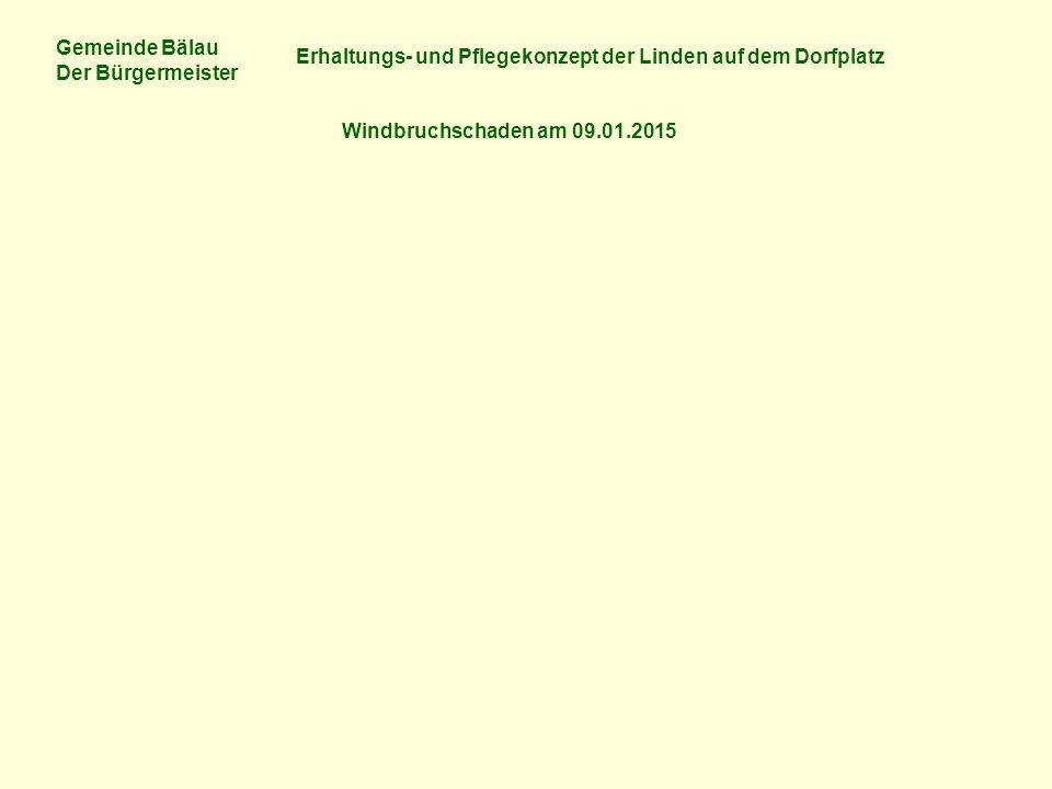 Gemeinde Bälau Der Bürgermeister Erhaltungs- und Pflegekonzept der Linden auf dem Dorfplatz Kosten der Gemeinde Bälau