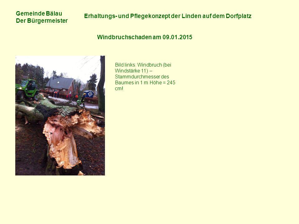 Gemeinde Bälau Der Bürgermeister Erhaltungs- und Pflegekonzept der Linden auf dem Dorfplatz Windbruchschaden am 09.01.2015 Bild links: Windbruch (bei