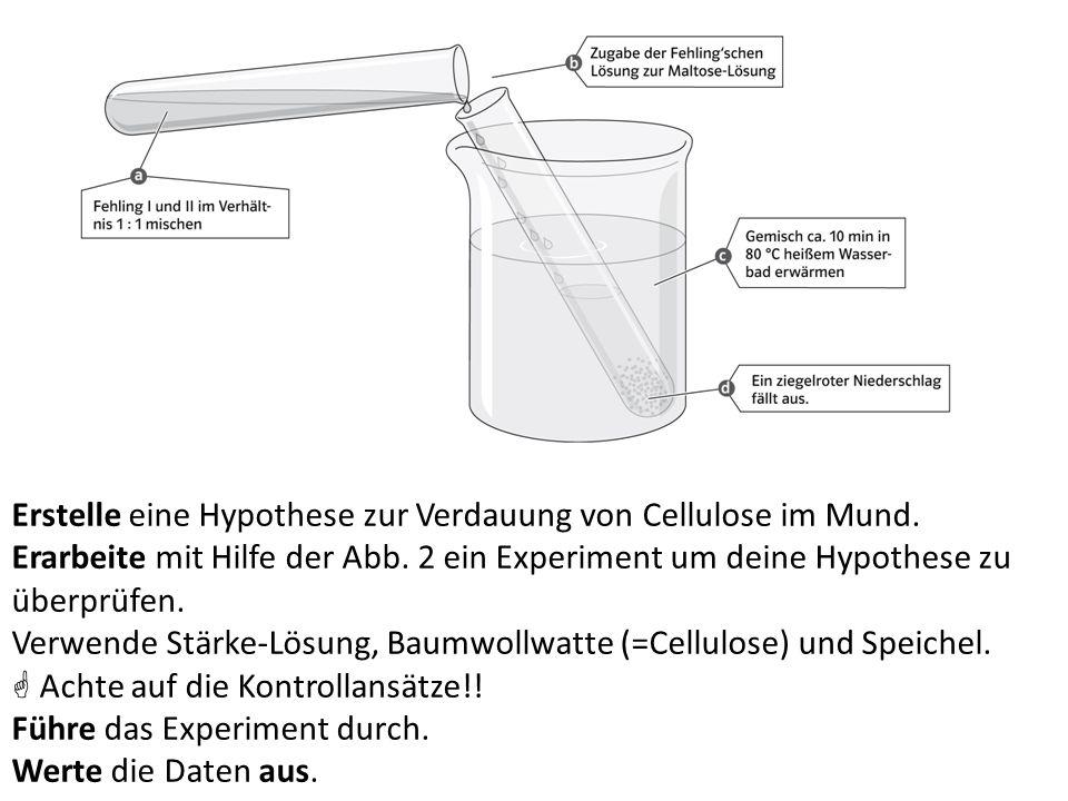 Erstelle eine Hypothese zur Verdauung von Cellulose im Mund. Erarbeite mit Hilfe der Abb. 2 ein Experiment um deine Hypothese zu überprüfen. Verwende