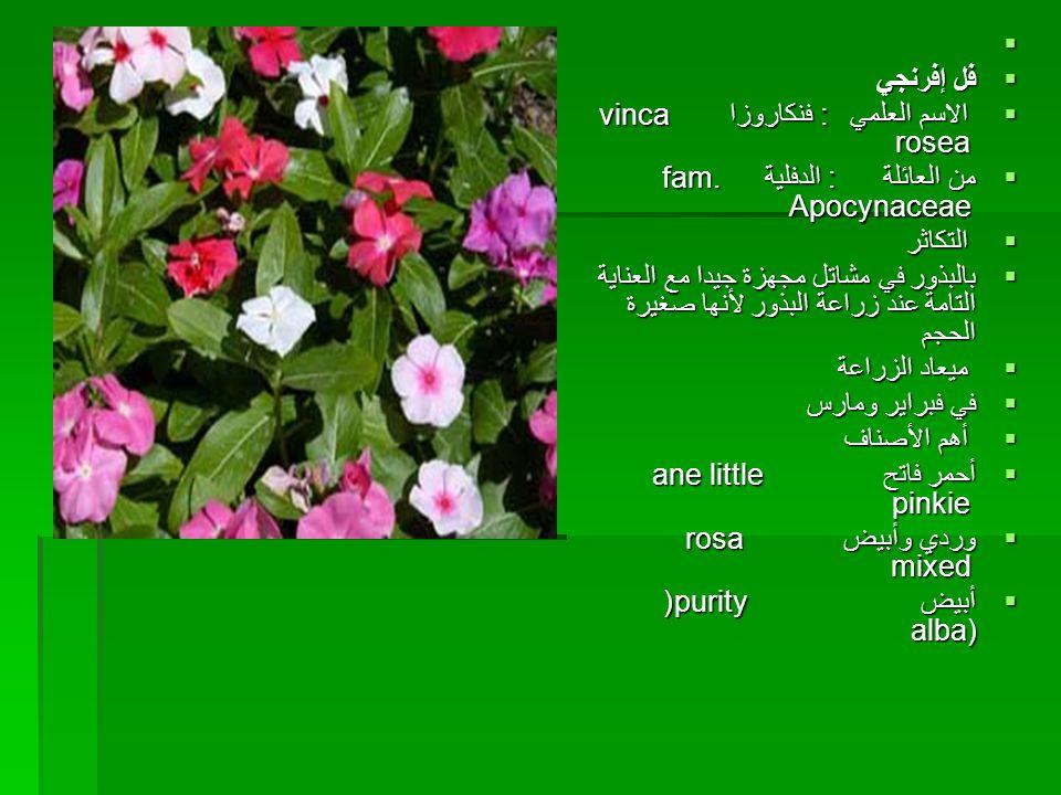    فل إفرنجي  الاسم العلمي : فنكاروزا vinca rosea  من العائلة : الدفلية fam. Apocynaceae  التكاثر  بالبذور في مشاتل مجهزة جيدا مع العناية التام