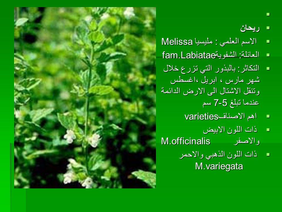   ريحان  الاسم العلمي : مليسيا Melissa  العائلة: الشفويةfam.Labiatae  التكاثر: بالبذور التي تزرع خلال شهر مارس ، ابريل ،اغسطس وتنقل الاشتال الى ا