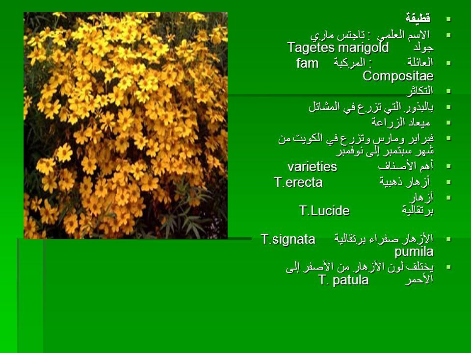  قطيفة  الاسم العلمي : تاجتس ماري جولد Tagetes marigold  العائلة : المركبة fam Compositae  التكاثر  بالبذور التي تزرع في المشاتل  ميعاد الزراعة