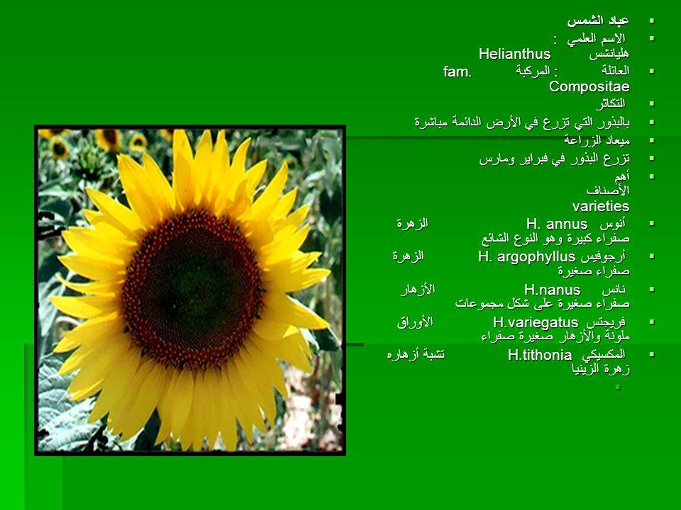  عباد الشمس  الاسم العلمي : هليانشس Helianthus  الاسم العلمي : هليانشس Helianthus  العائلة : المركبة fam. Compositae  التكاثر  بالبذور التي تزرع