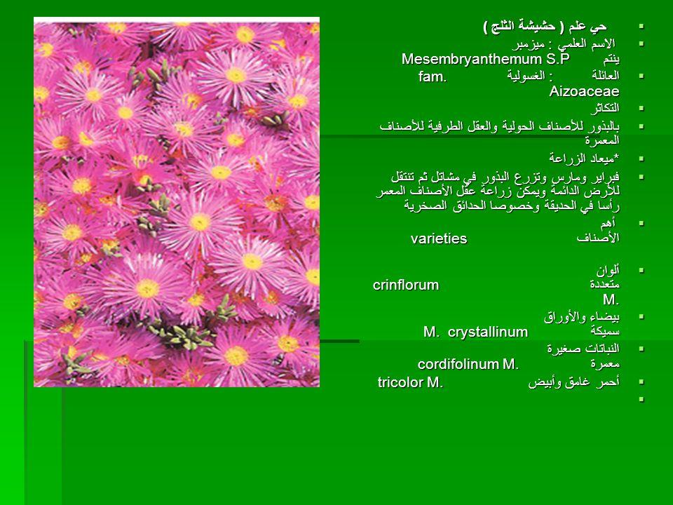  حي علم ( حشيشة الثلج ) الاسم العلمي : ميزمبر ينتم Mesembryanthemum S.P اااالعائلة :الغسولية fam. Aizoaceae اااالتكاثر ببببالبذور للأصنا