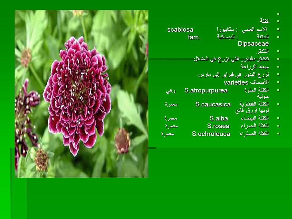   كتلة  الاسم العلمي : سكابيوزا scabiosa  العائلة : الدبساكية fam. Dipsaceae  التكاثر  تتكاثر بالبذور التي تزرع في المشاتل  ميعاد الزراعة  تزر