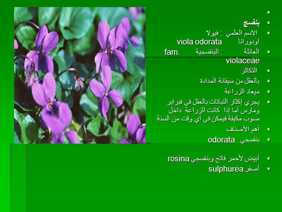   بنفسج  الاسم العلمي : فيولا اودورانا viola odorata  العائلة : البنفسجية fam. violaceae  التكاثر  بالعقل من سيقانة المدادة  ميعاد الزراعة  يج